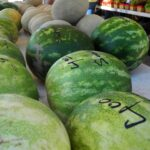 watermelons frisco farmers market
