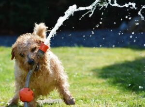 summer dog with water hose