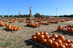 Pumpkins on the Prairie Frisco