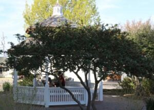 Downtown Frisco gazebo