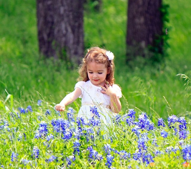 Bluebonnets Texas