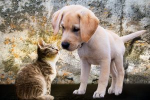 puppy kitten - Anderson Insurance Agency