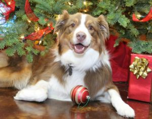 Pet Pictures with Santa @ LazyPaw Animal Hospital