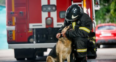 fire fighter dog