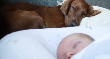 dog and baby family pet